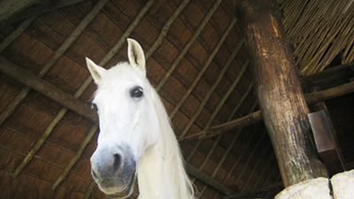 horse xcaret - vacations cancun