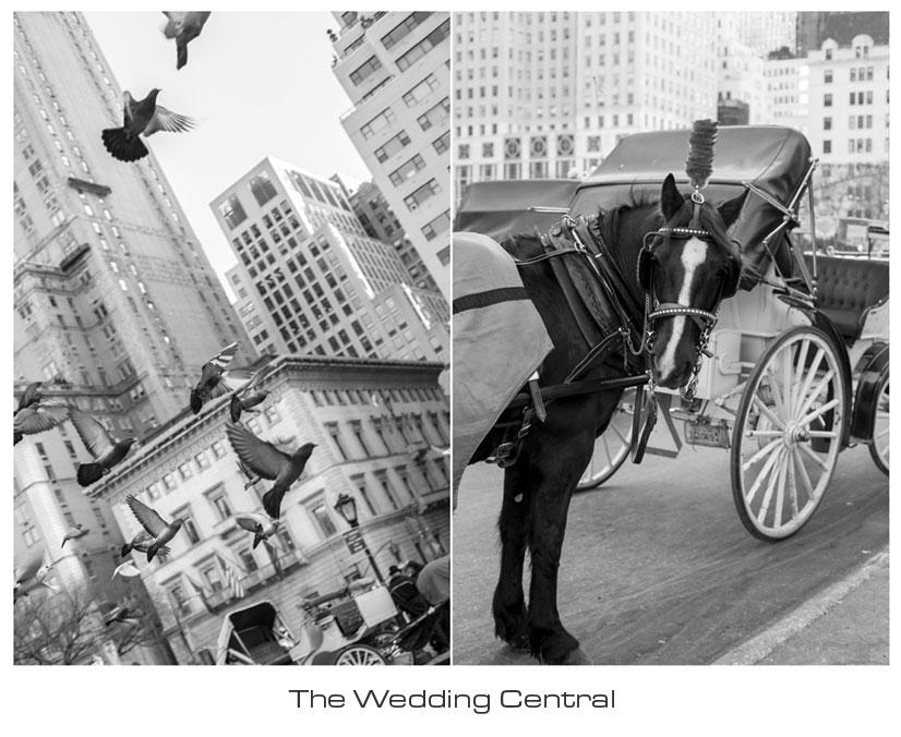 NYC engagement photographer brenda ryan