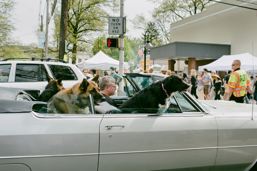 dogs in convertible