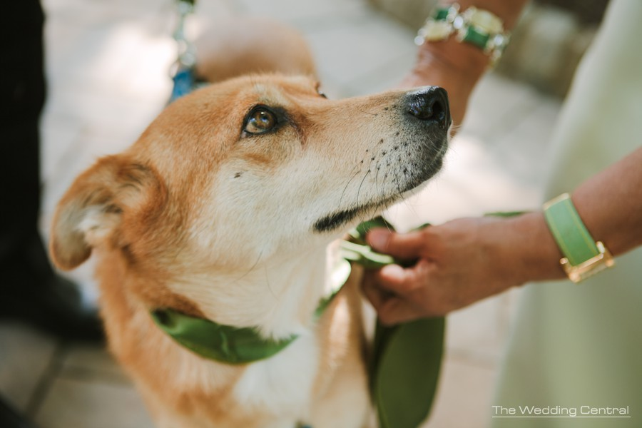 dog as part of the family wedding photos - pa wedding photographer