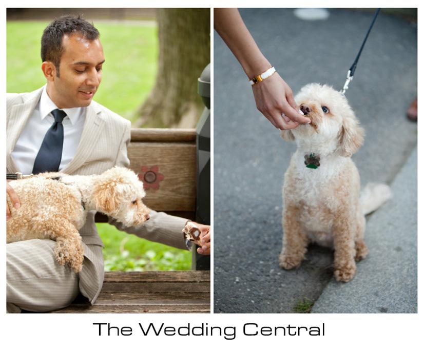 NYC Engagement Photographer - dog eating treat