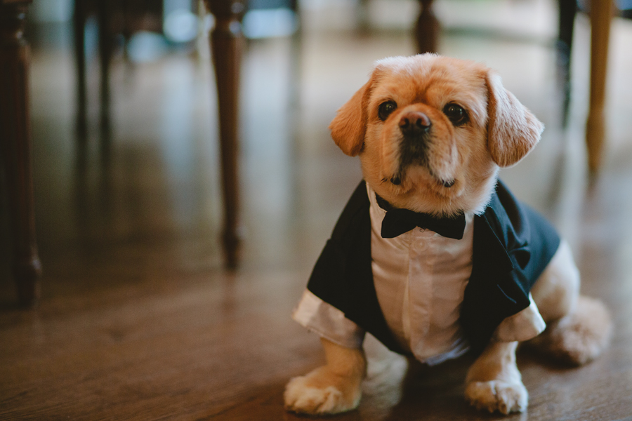 cute dog dressed in tuxedo for wedding - Fiddlers elbow wedding photography Bedminster NJ